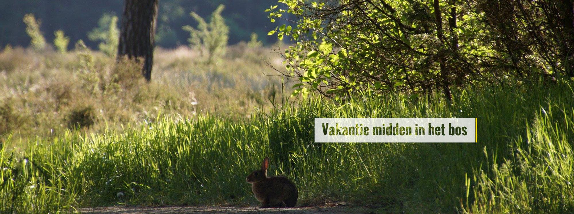 slider_in_het_bos